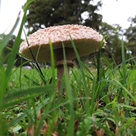 Ramírez_Mushroom